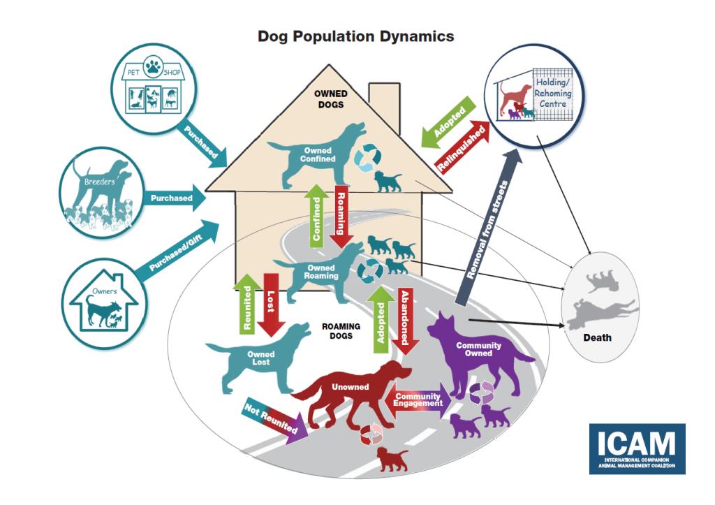 Figure 1 – Dog population dynamics