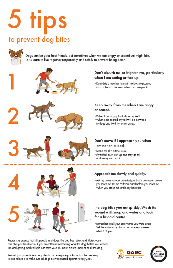 World Animal Protection's 5 tips to prevent dog bites – education package