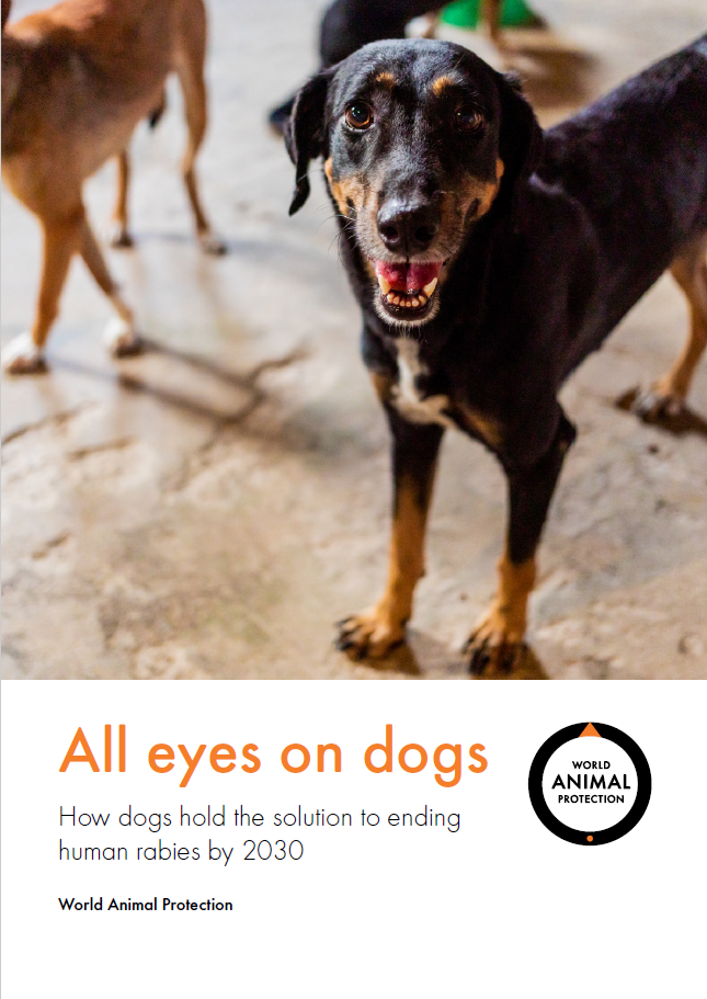 World Animal Protection's All eyes on dogs report